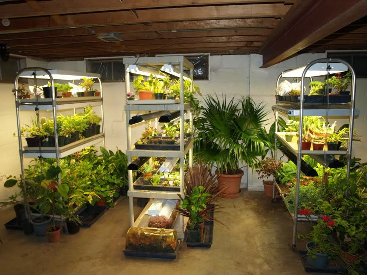 Great Grow Light SetUp thread on gardenweb - awesome! would love to be able to do this! some day :)