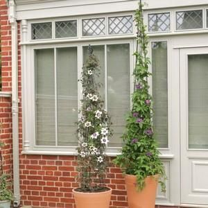 Garden Answers March 2014 - Add a Touch of Elegance. Give climbing plants the support they need with a handsome obelisk. http://www.harrodhorticultural.com/cone-obelisk-pid7713.html Cone Obelisk - Harrod Horticultural (UK)