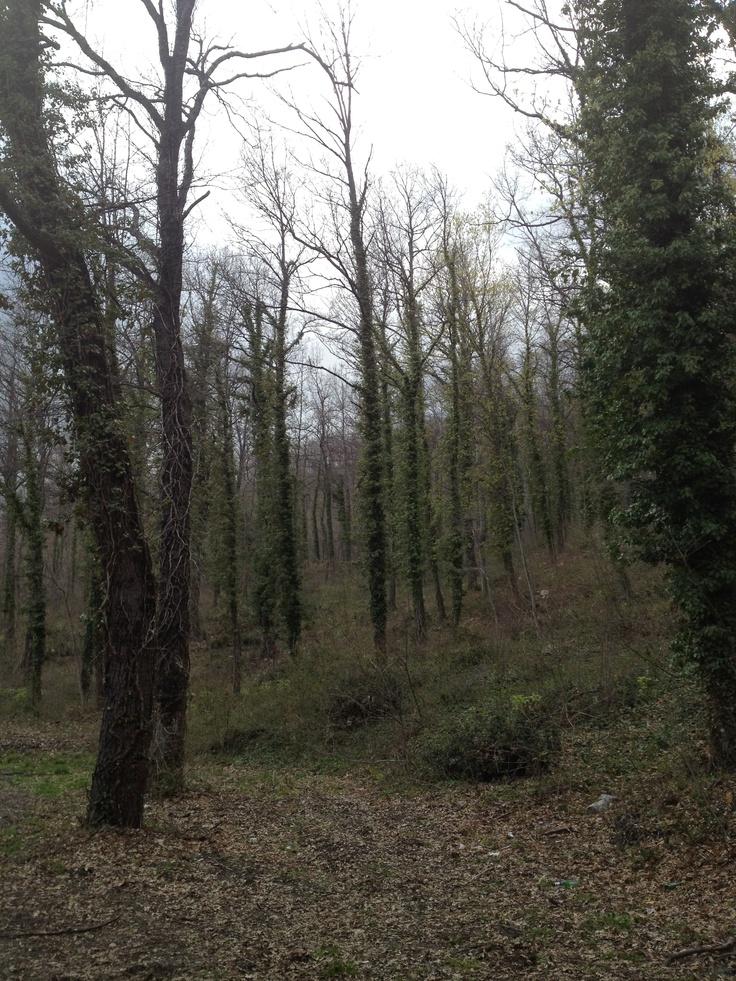 nel bosco /into the woods - monteferrante