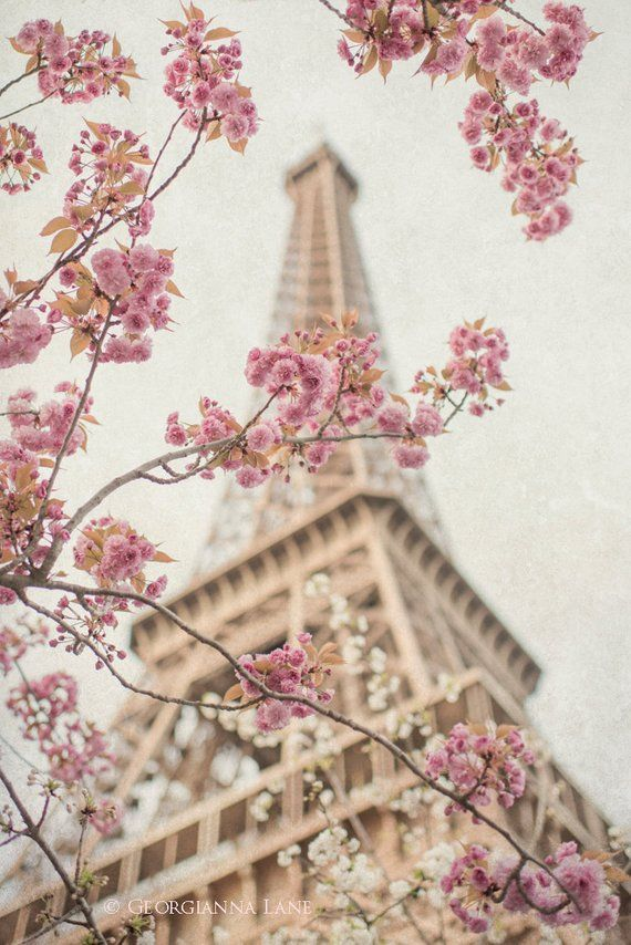 Paris Photography – Eiffel Tower with Cherry Blossoms, Spring in Paris, Travel Fine Art Photograph, Large Wall Art