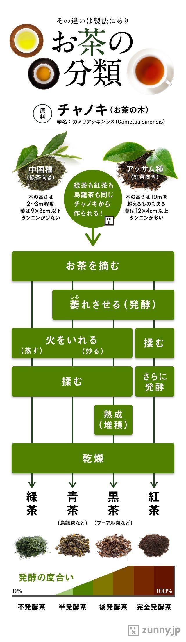 製造法もひと目でわかる「お茶の分類」早見表 | ZUNNY インフォグラフィック・ニュース