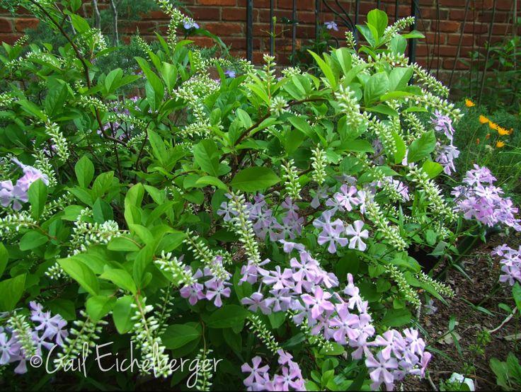 clay and limestone wildflower wednesday shrubs in a wildflower garden
