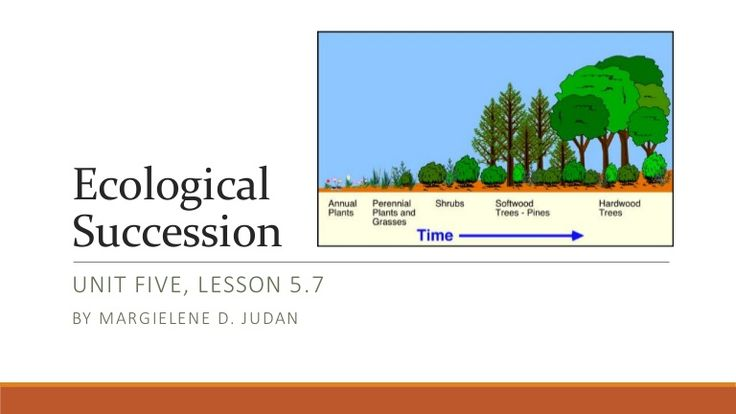 Best 25 Ecological Succession Ideas On Pinterest Food