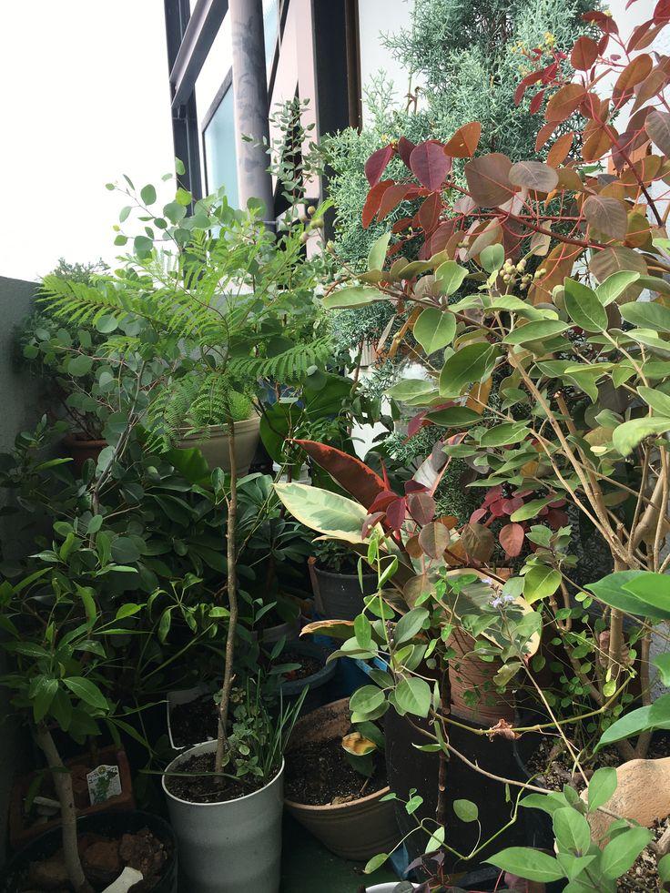 ベランダ植物 おしゃれまとめの人気アイデア Pinterest 緑と花の