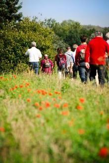 Wandelnetwerk Hagelandse Heuvels Gemeenten: Aarschot, Bekkevoort, Holsbeek, Kortenaken, Leuven, Lubbeek, Rotselaar, Tielt-Winge
