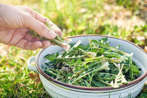 Sedmero léčivých plevelů na salát, do smoothie i polévky
