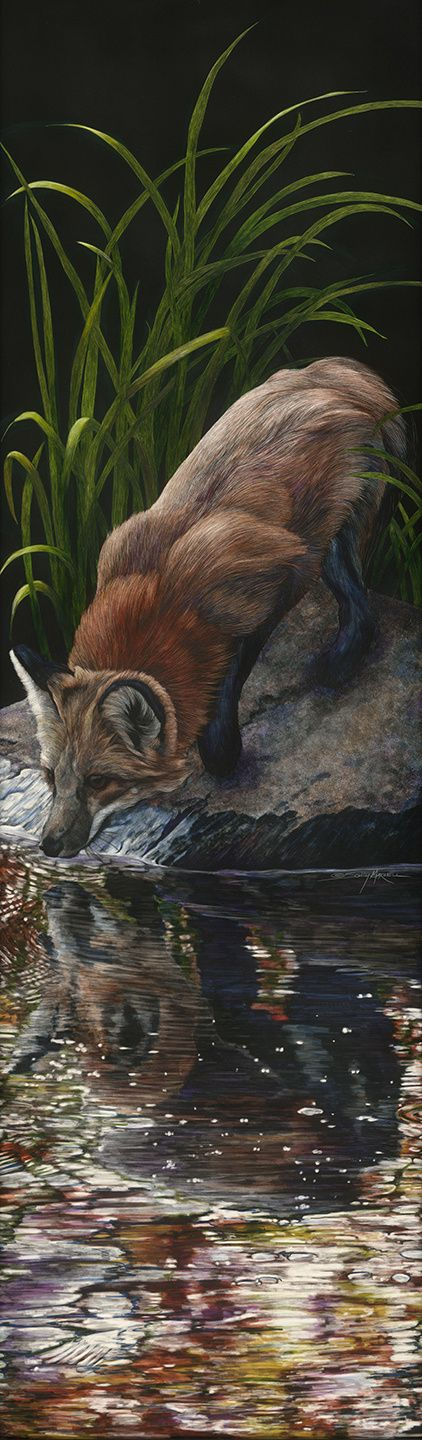 Sally Maxwell - Narcissus - This red fox was about to drink from the lake when something caught his eye above. I actually wanted to title this Narcissus before the fall, but thought that was too long. Lots is going on here. The reflection is distorted but beautiful, nonetheless. Often this is how we think of our selves