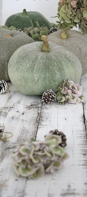 soft heathered green pumpkins and hydrangeas, so beautiful together  Fall ♕ Nelly Vintage Home