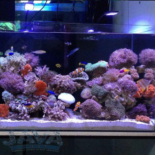 pembuatan aquarium air laut untuk rumah di jakarta pusat
