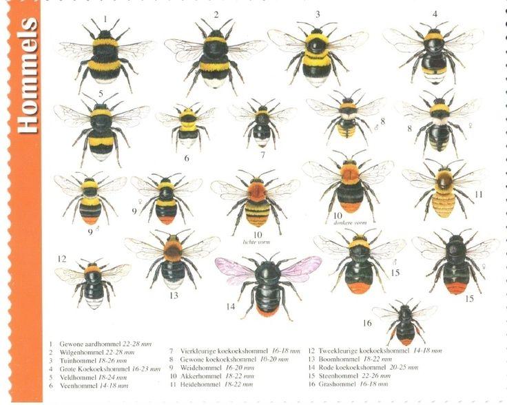 van der Meulen - bumblebees