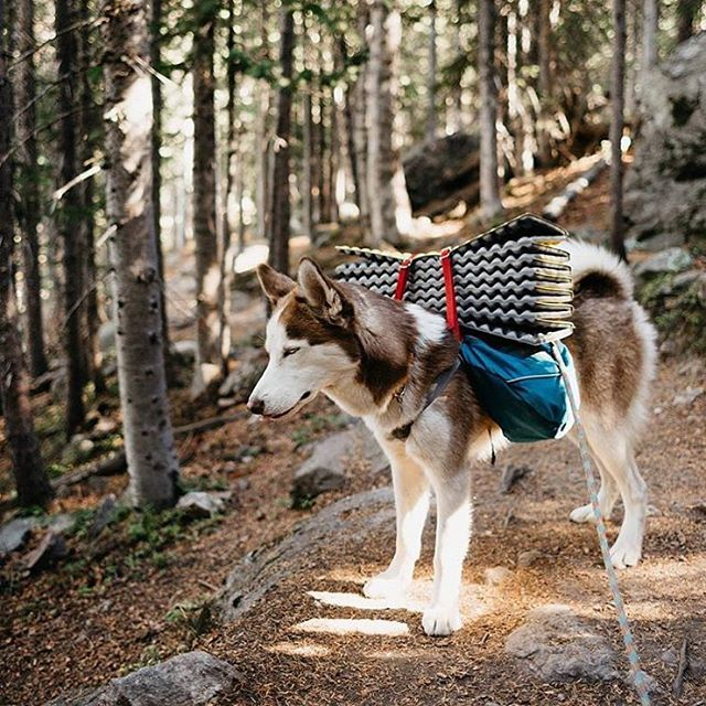 """2,861 Likes, 22 Comments - The Camping Collective (@campingcollective) on Instagram: """"Monday feels   Photo by @kuma_thehuskybear  Share your adventure #campingcollective"""""""