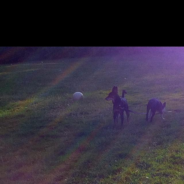 Buddy & Rocco: Buddy, Rocco, Dogs