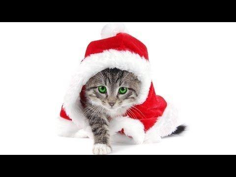 Legszebb karácsonyi dalok - Hófehér Karácsony. - The most beautiful Christmas songs - Snow White Christmas.