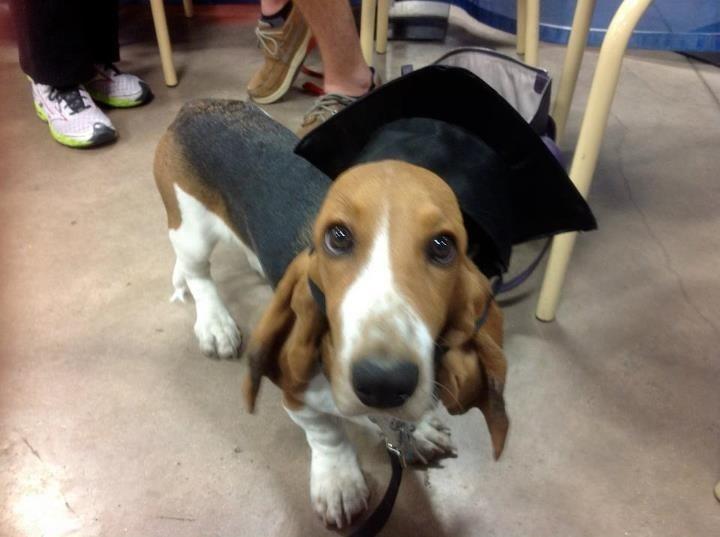 R Beagles Smart 17 Best images about D...