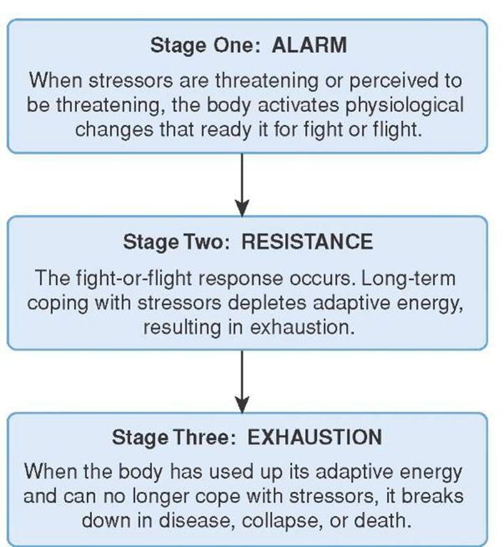 the fight or flight syndrome Fight-or-flight response: fight-or-flight response, response to an acute threat to survival that is marked by physical changes, including nervous and endocrine.