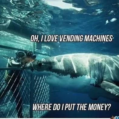 #FridayFunnies   Cue the Shark Attack Music Like a Vending Machine   #ScubaMedicFL #Dive #PADI #UnderwaterPhotography #DiversAlertNetwork #Independent #ScubaInstructor #DiveJax #DiveStAug #DiveStAugustine #GetScubaCertified #OpenWater #AdvancedOpenWater #Nitrox #StAugustine #NREMT #Paramedic #Firefighter #DiscountScubaGear #ScubaTravel #VeteransScuba #FREEApp4iPhone #FREEApp4Android #CPRInstructor #DiveTravel http://ift.tt/2hVSXWk