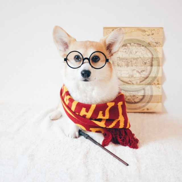 """14 Adorable Pups Who Love """"Harry Potter"""" As Much As You Do"""