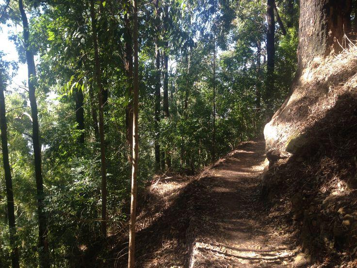 Table Mountain contour path above Rhodes Memorial.