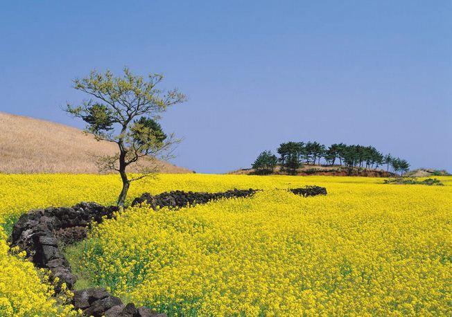 keindahan pulau jeju korea
