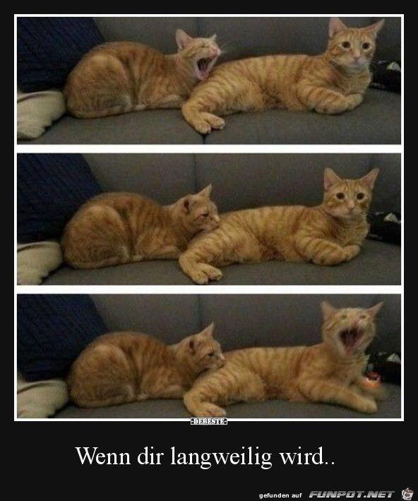 lustiges Bild 'Wenn dir langweilig wird.jpg'- Eine von 33988 Dateien in … – Manuela Kammler