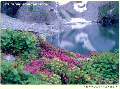 hemkunt-valley-flowers-1.jpg (475×355)