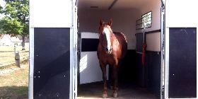VERLADETRAINING  Immer mal wieder kann es notwendig werden, sein Pferd zu transportieren. Eine Hürde, die es dabei zu nehmen gilt, ist das Verladen. Dabei sollte das Pferd vertrauensvoll vor dem Menschen den Hänger betreten. Den Weg dahin zeige ich Dir.
