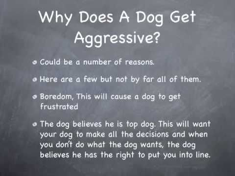 4 Ways to Stop Aggressive Behavior in Dogs - wikiHow