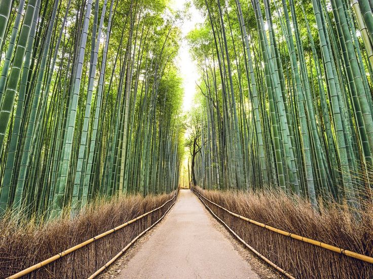 Kyoto is the elegant, sometimes-moody cousin to modern Tokyo. Visitors there can sample a range of traditionally made sakes, take meditation classes in a Buddhist temple, or check out a museum dedicated to manga.