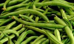 Dwarf green beans - flower twice so get two harvests