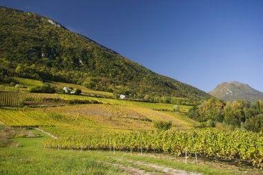 [Camping à la ferme] 73800 ARBIN -  Domaine Genous -- Nous représentons la 3e génération de vignerons à travailler sur le domaine, nos ancêtres cultivaient déjà la vigne dans les Abymes dus à l'éboulement du Mont Granier en 1248. Notre domaine s'étend sur 12 hectares que l'on travaille en biodynamie, véritable méthode de soin de la terre considérée comme être vivant relié au cosmos.
