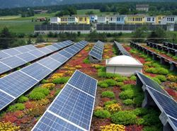Solar panels on green roof