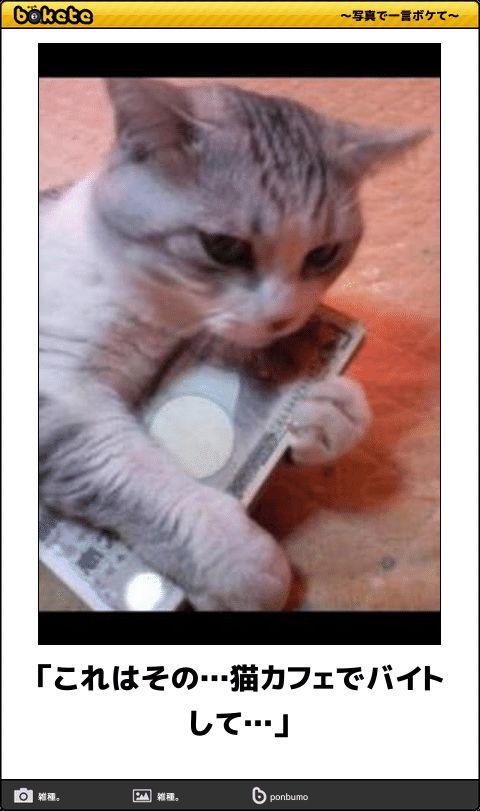 「これはその…猫カフェでバイトして…」