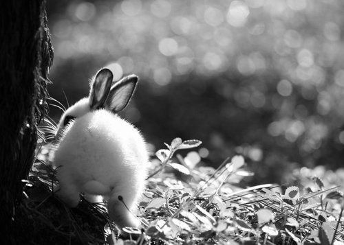 black and white animal photography | animal, b&w, beautiful, black & white, black and white