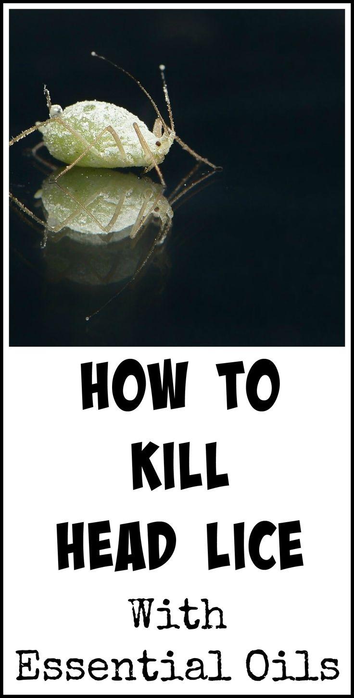 best good bug bad bug images on pinterest cleaning home