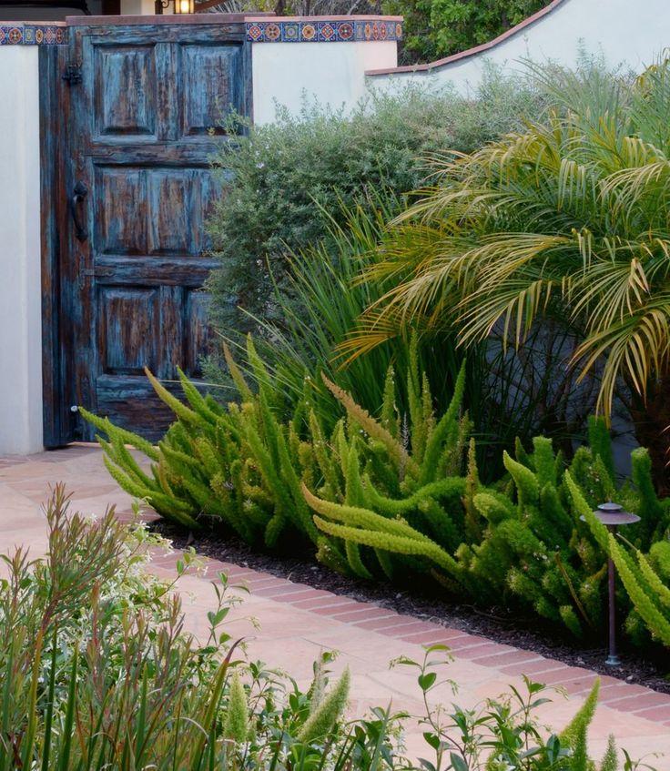 foxtail fern Landscape Mediterranean with landscape design Cheryl Hamilton Gray  Garden  Fern
