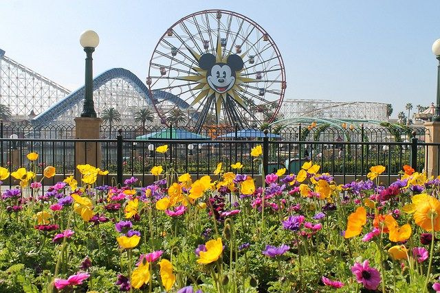 Disney California Adventure ride closures  #disney #disneyland #disneycalifornia adventure