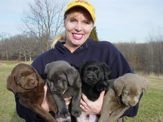 Chocolate,Silver, Black, and Charcoal Gray Labrador Retriever Puppies -- yes, I'll take one of each please!