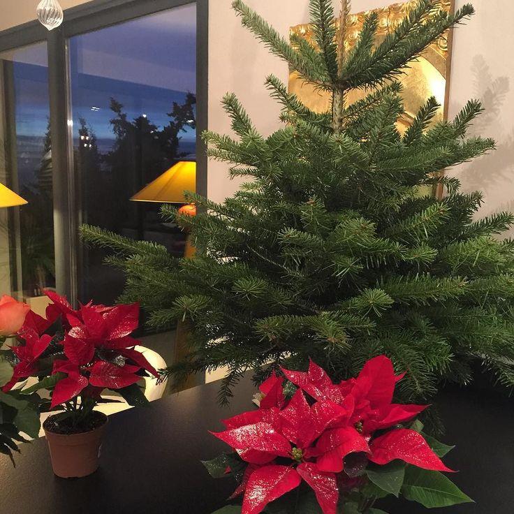 Ура ура ура!! Скоро Новый год  а это значит гулянья подарки сюрпризы исполнения желаний  елка еще не наряженная так как только сегодня мы ее поселили у нас дома  #елка #моеуютноегнездышко #мойдом #моидоммоякрепость #франция #ницца #franceriviera #followme #nice #france #happiness #happynewyear #happycristmas а вы уже нарядили елки?)) by elvirat_nice at http://ift.tt/1hCWVmI