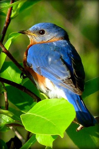 Wild Bird Dinner Nov 5 2014 at Jarrettsville Gardens Fire Hall! call 410-838-6111 for more info and to register!
