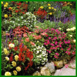 Beet mit Regenbogenfarben.  Nur wenige Gartenbeete können den Farbenzauber bieten, den ein Beet mit Regenbogenfarben mit einjährigen Pflanzen in voller Blüte ausstrahlt  http://www.gartenschlumpf.de/beet-mit-regenbogenfarben/