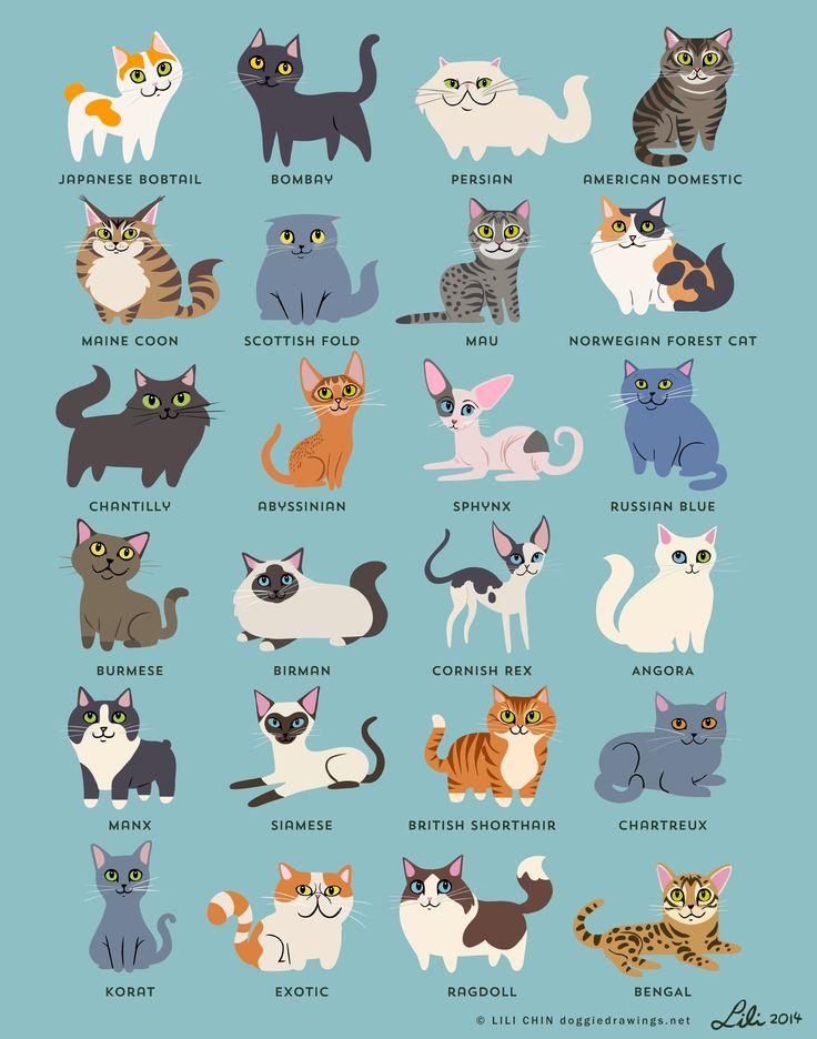 """""""CATS!"""" - Lili Chin"""