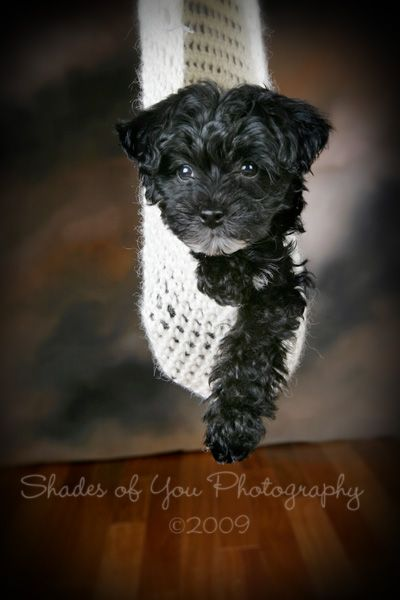 Gracie might look a little like this but with more white when she grows up