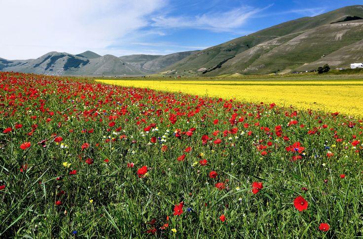 La fioritura - Umbria