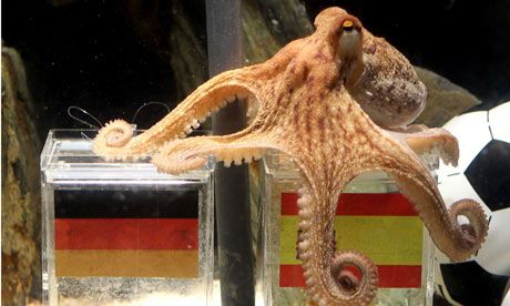 Paul the octopus: the accidental hero predicted the winners of each of the seven 2010 FIFA World Cup matches. #misshim