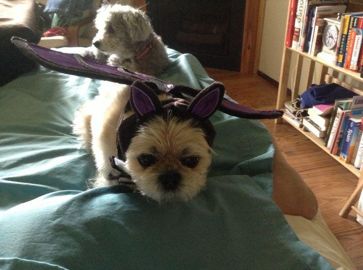 Getting ready for Hallowe'en!