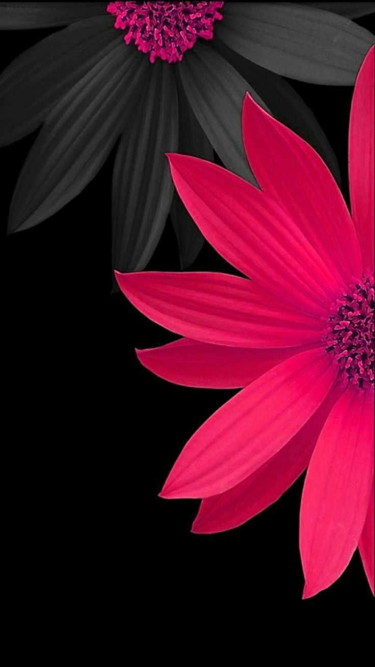 best flowers images on pinterest background images backgrounds