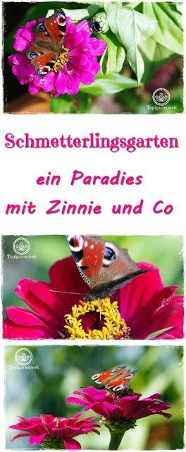 Gartenblog Topfgartenwelt Schmetterlingsgarten: Ein Paradies für Schmetterlinge im Garten schaffen mit ausgewählten Pflanzen, wie z.B. Zinnie oder Schmetterlingsflieder Schmetterlinge anlocken #schmetterlingsgarten #garten #schmetterlinge #tagpfauenauge #pflanzen #zinnie #schmetterlingsflieder