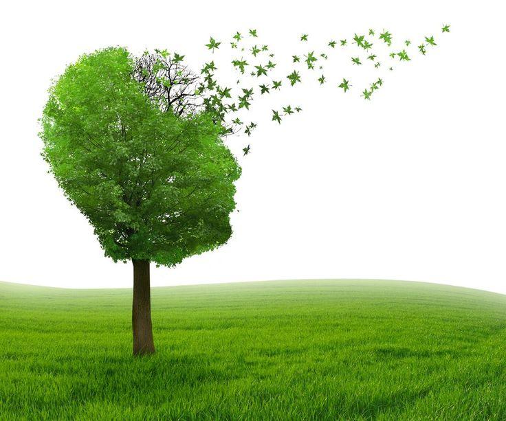 Alzheimers alternative cures