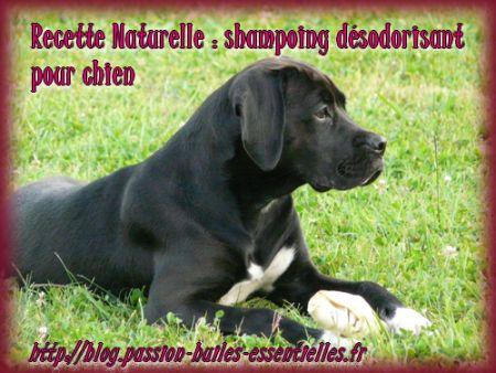 Faites le shampoing désodorisant de votre chien !