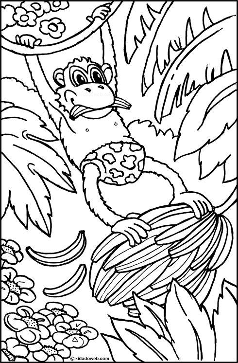 Kleurplaat Aap Kleuters Coloriage Animaux Singe